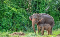 Adult elephant and young elephant