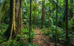 Take a hike through the rainforest at Manu National Park.