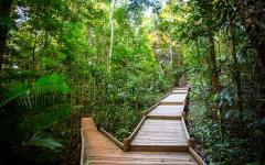australia rainforest walkway