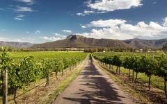 a road through the middle of a vineyard with moutains in the background in the hunter valley