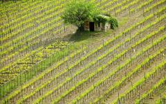 A small farmhouse in Montalcino.
