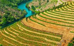 portugal wineyards in the valley of the river douro