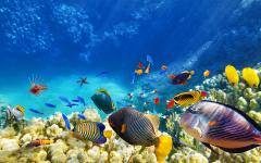 australia great barrier reef colorful tropical fish underwater