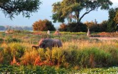 An elephant at Mana Pools National Park in Zimbabwe.