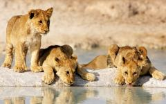 Up to 3 Top Namibia Specialists;Compete to Customize Your Perfect Trip