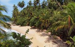 White sand beach in Belize.
