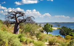 Chobe River with trees in the foreground including a Baobab tree | Botswana Africa