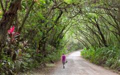 Woman walking on a dirt path along the Osa Peninsula.