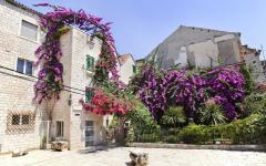 Flower filled patio in Split, Croatia.