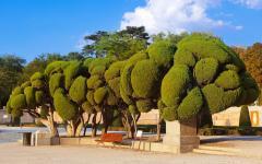 spain madrid retiro park trees