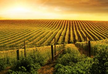Australia is home to a beautiful wine country.