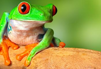 Costa Rica is one of the most biodiverse countries in the world.