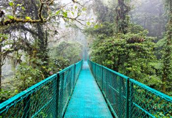 A bridge crosses the canopy in Costa Rica's Monteverde Cloud Forest