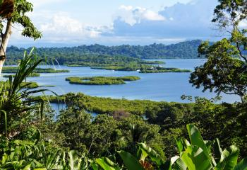 The lush landscape of Bocas del Toro in Panama.