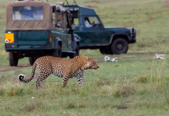 Signature Tours South Africa