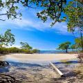 Mangrove forest near Port Douglas.