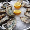 Tasty plate of fresh oysters.