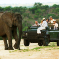 A big-game-safari tour gazing at a teenaged elephant in the foreground