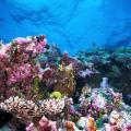 Underwater view of Great Barrier Reef.