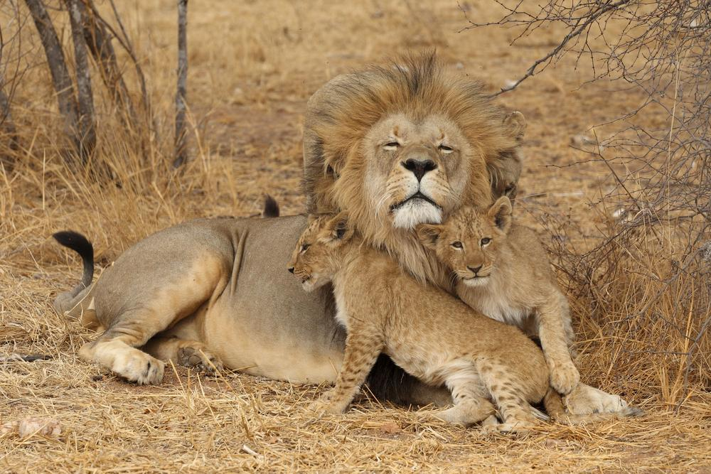 Great Migration African Safari Tanzania And Kenya