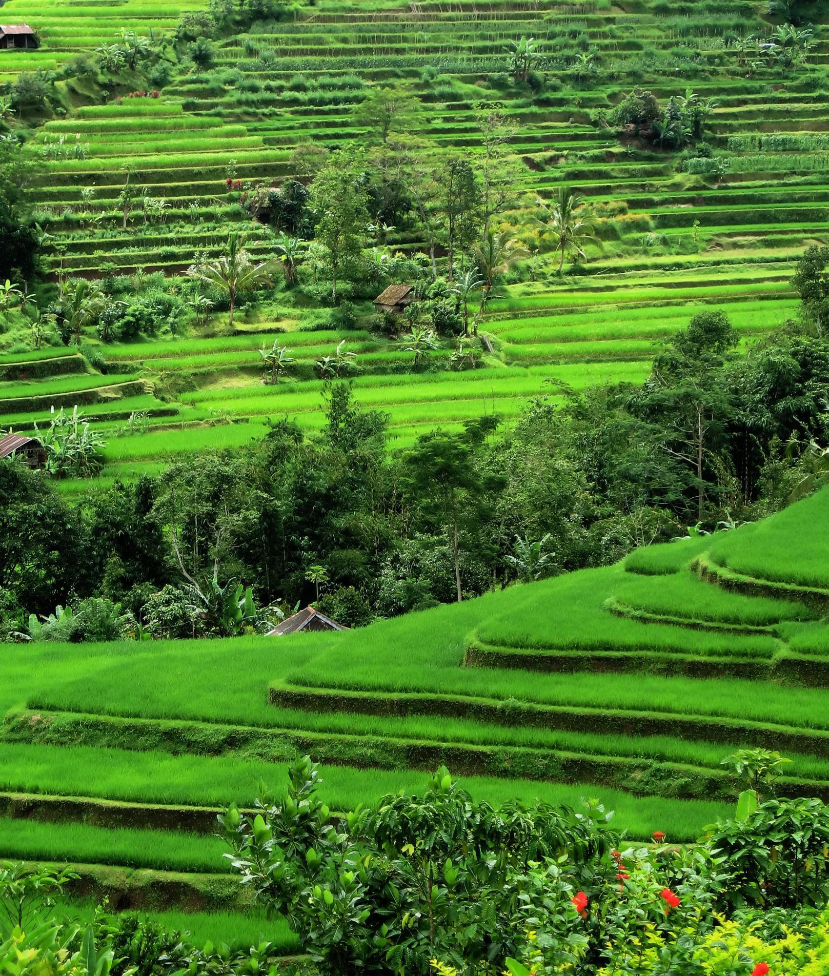 indonesia adventure  bali  u0026 yogyakarta
