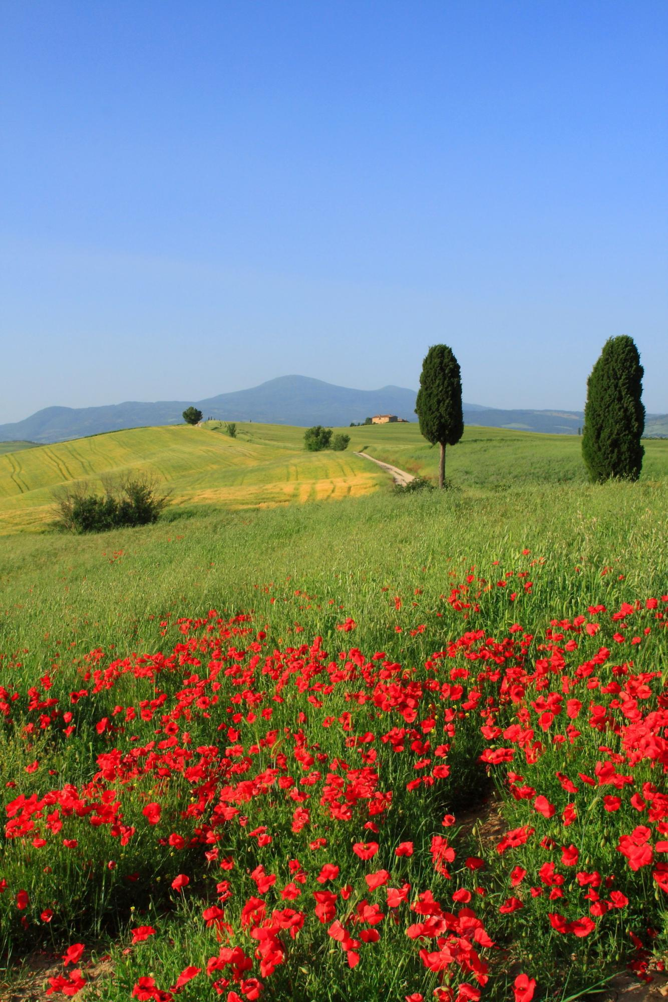 An Italian Wine Tasting Journey From Piedmont To Tuscany Wine Tour Zicasso