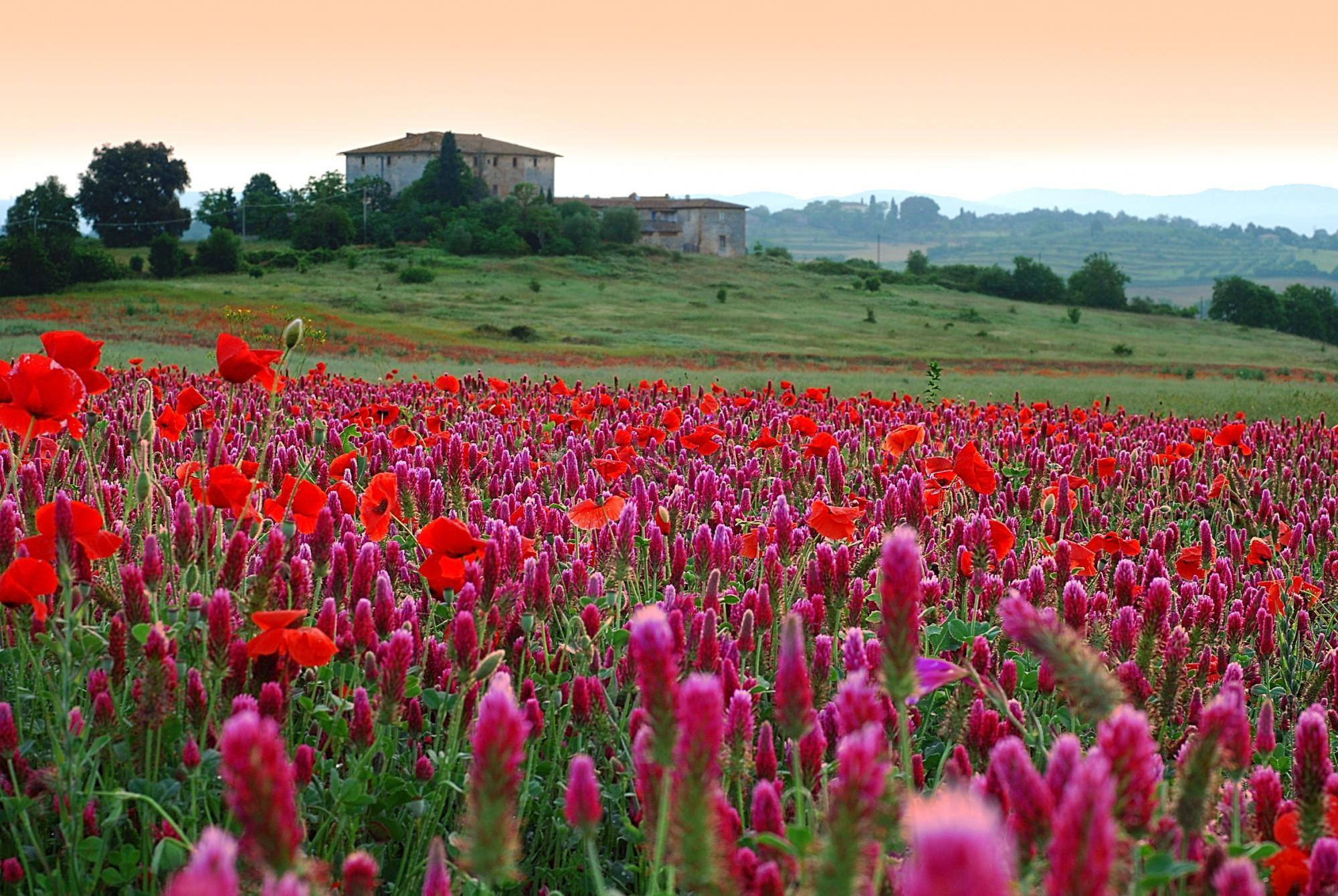 Just In Tuscany Tours