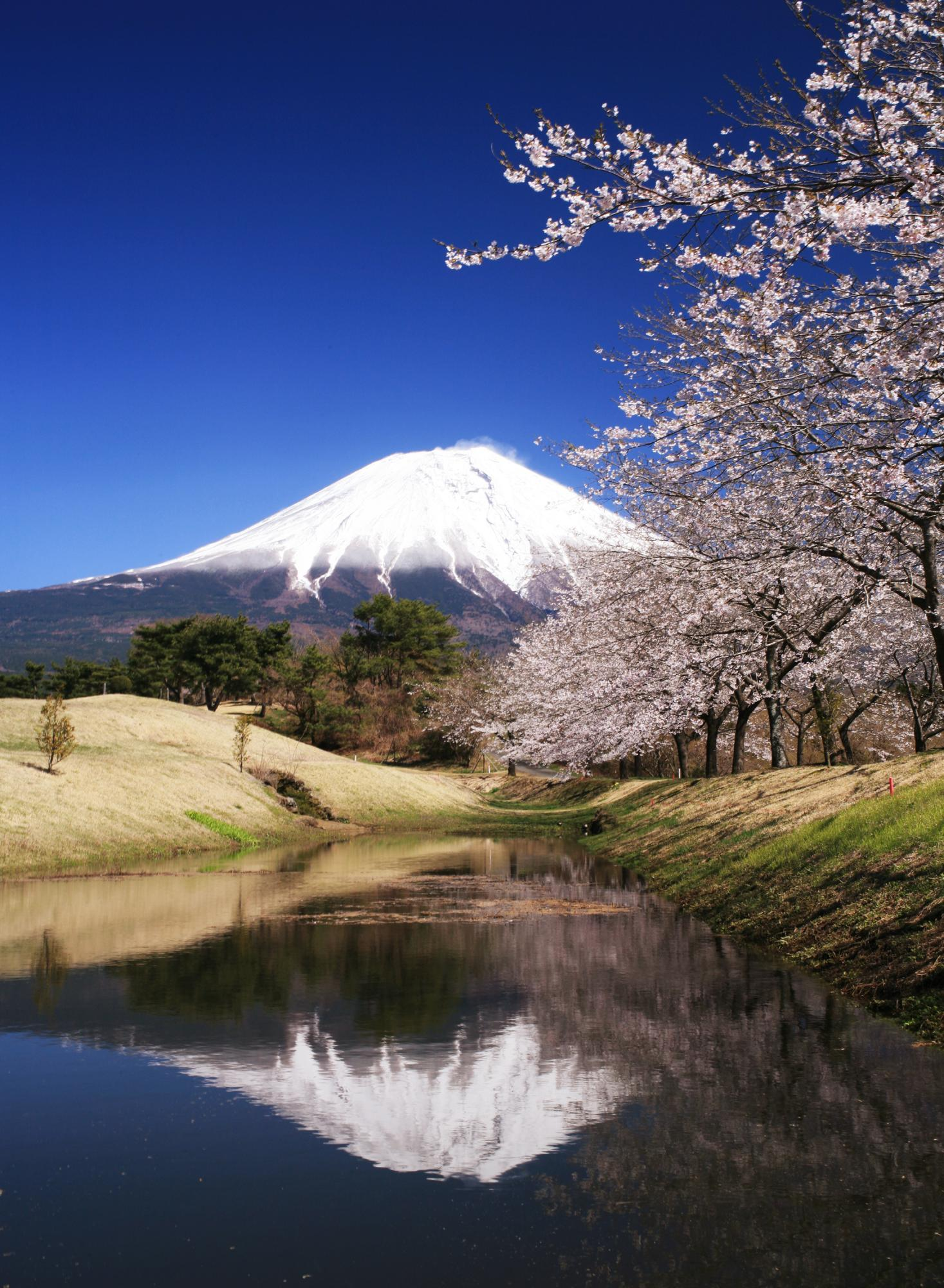 Experience The Rich Culture Of Japan