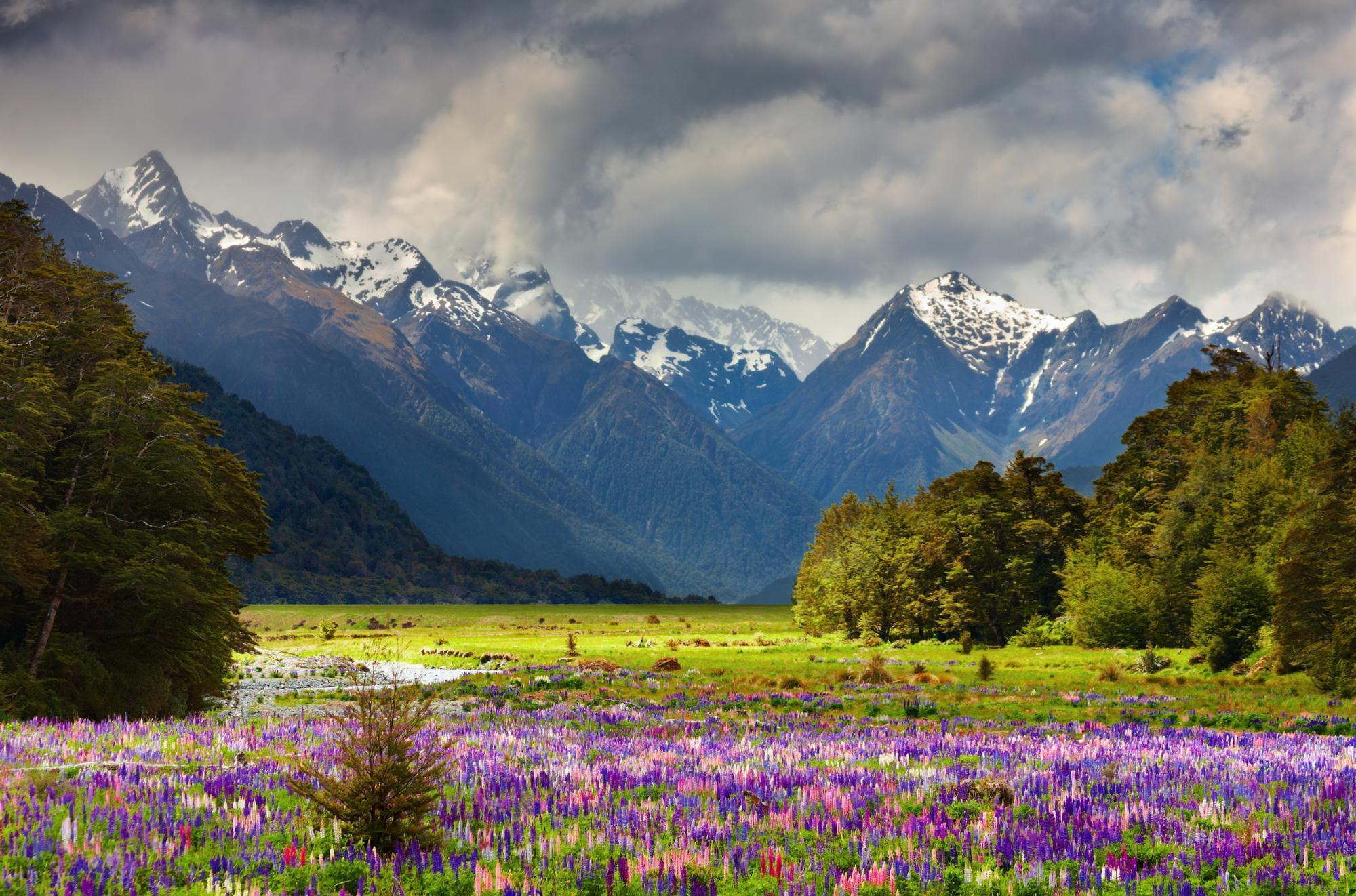 An ultimate luxury new zealand tour zicasso for Landscaping companies in new zealand