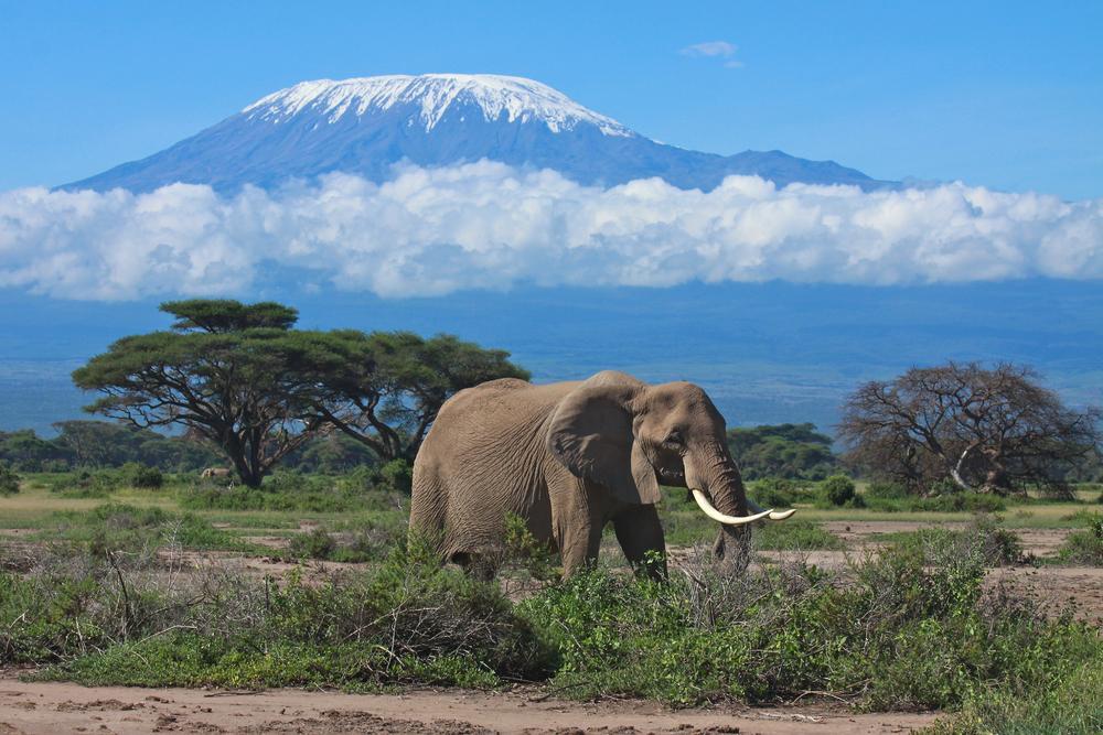 Wilderness Travel Kilimanjaro Reviews