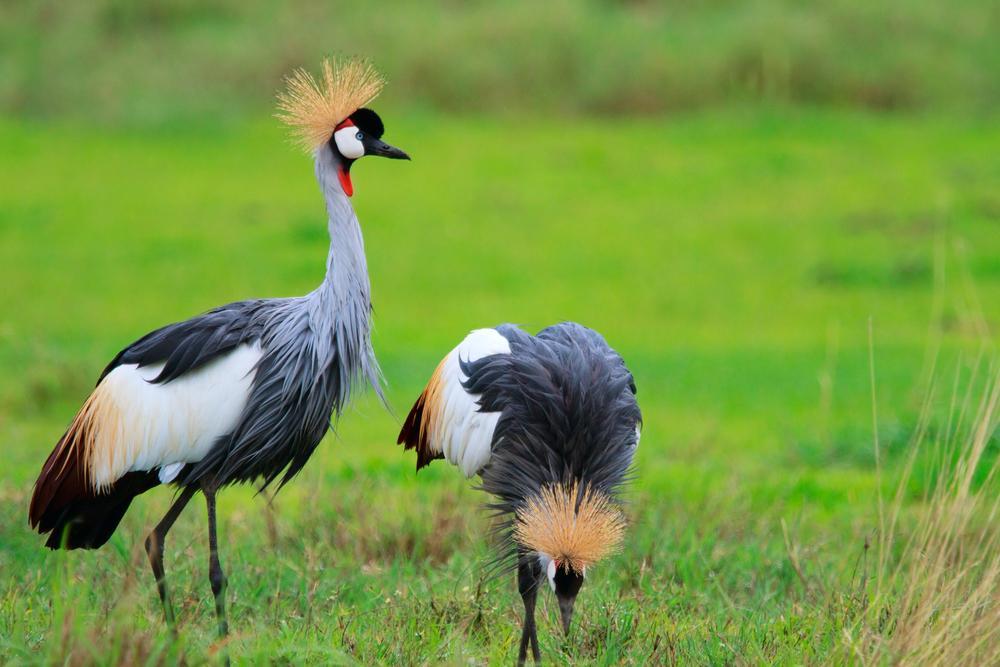 Ngorongoro Crater Safari Wildlife Amp Lava Zicasso