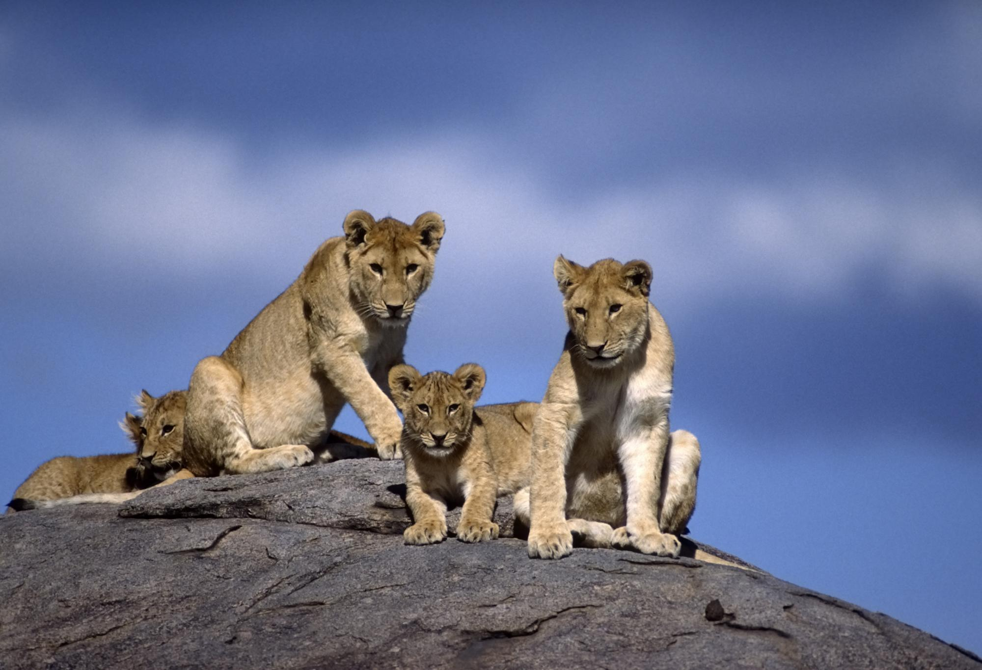 Intimate Two-Week Safari: Serengeti, Katavi & Mahale ...