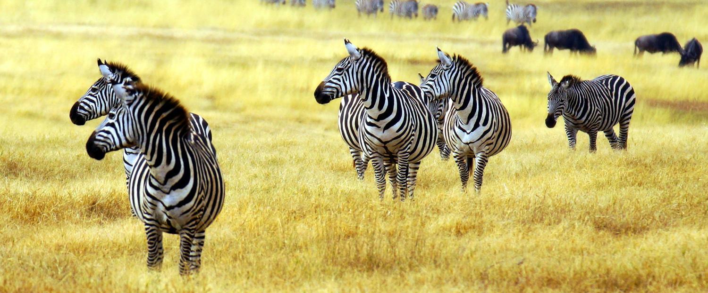 Luxury Africa Safari At Sabi Sabi Pristine African