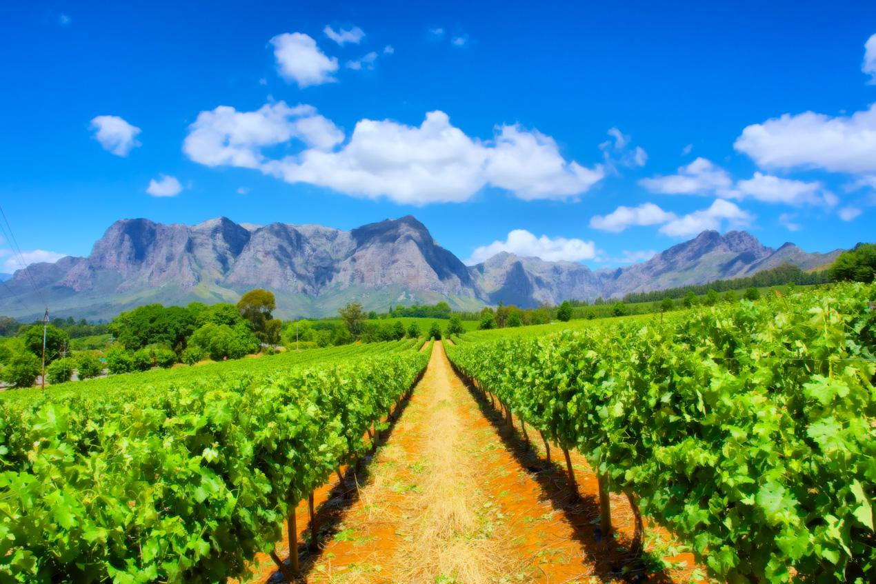 Essence of south africa tour nature safari winelands for Jardin winery south africa