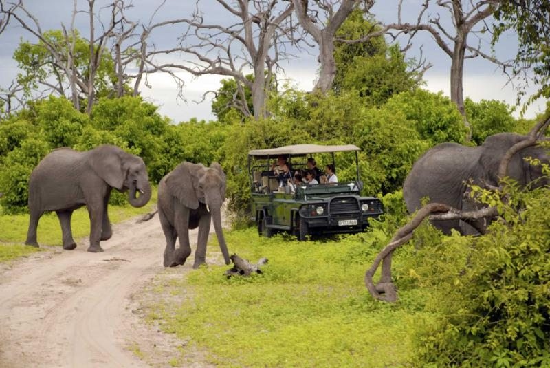 Elephant Safari in Botswana. Credit: Shutterstock.