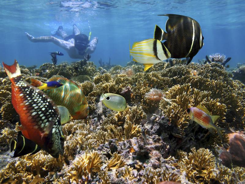 Costa Rica's coral reefs