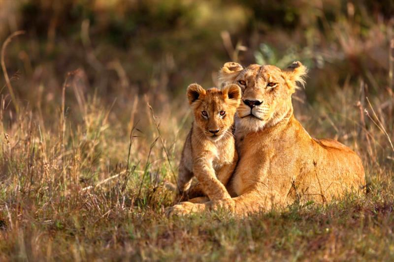 Image result for south africa safari images