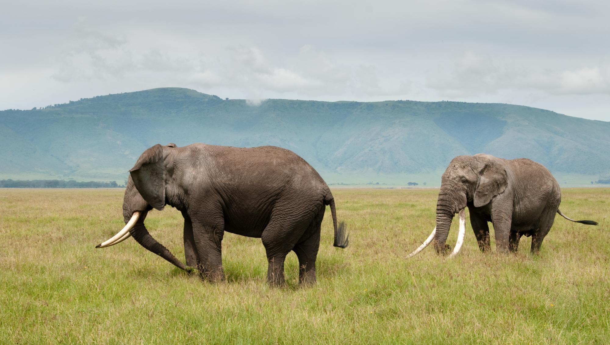 Best Of East African Safari Gorilla Trekking Maasai Mara