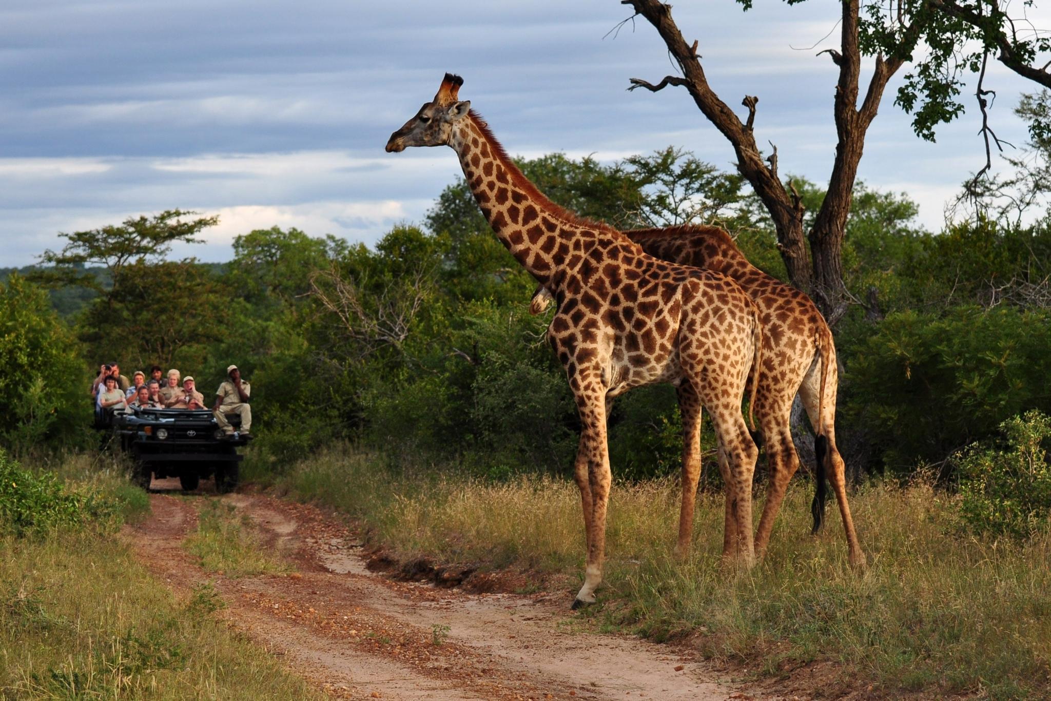 5-Star African Safari ...