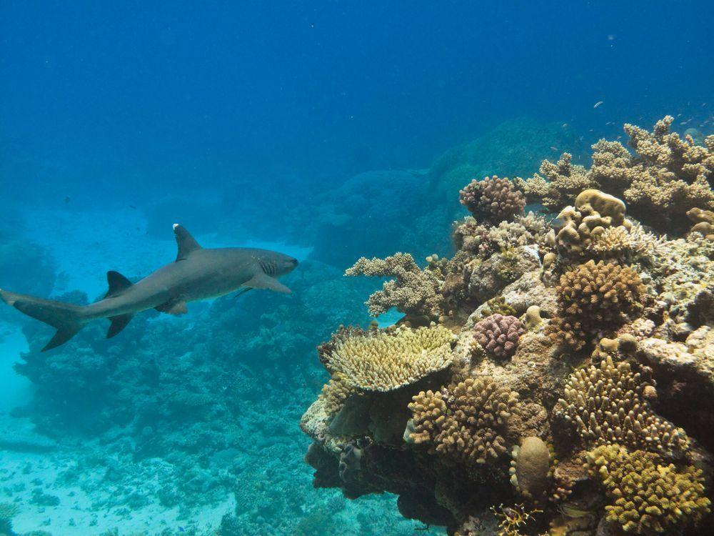 Great Barrier Reef Travel Agency