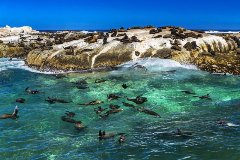 Wildlife Wonders Ten Day South Africa Vacation For