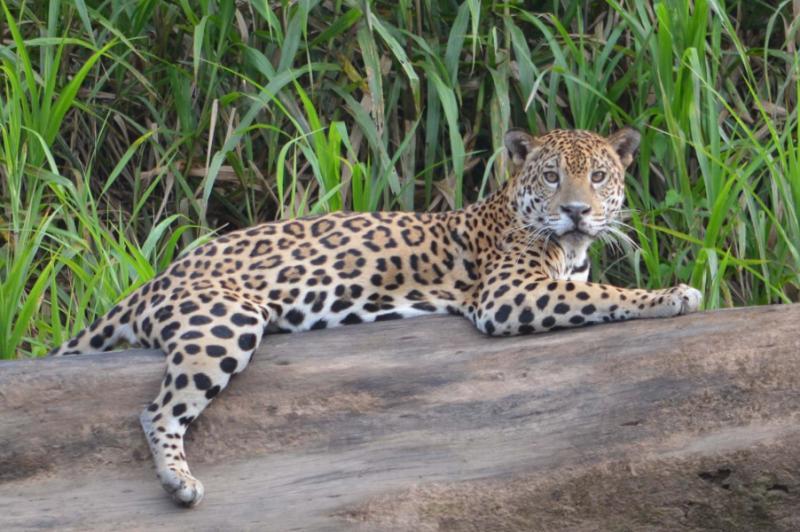 wilderness wildlife wildwater of peru tour zicasso. Black Bedroom Furniture Sets. Home Design Ideas