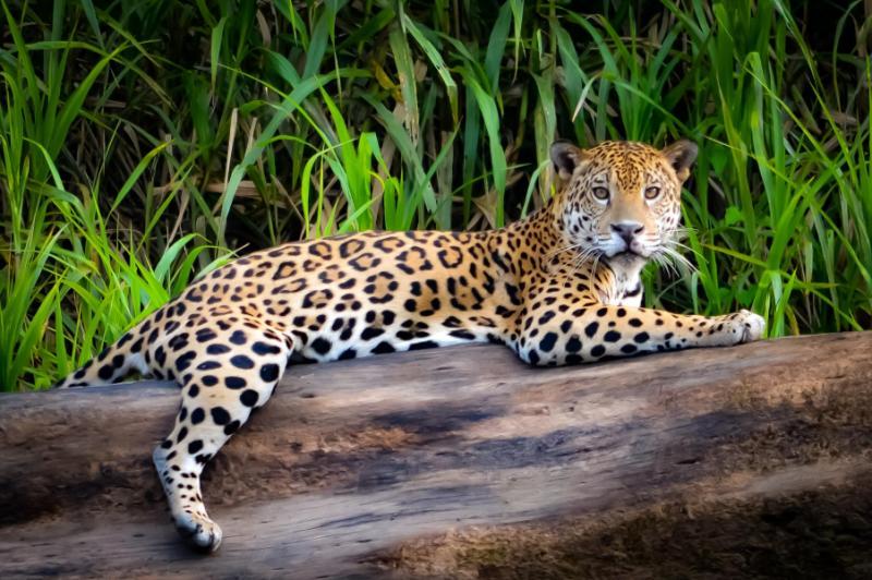 peru wildlife inca ruins tour from the amazon rainforest to machu picchu zicasso. Black Bedroom Furniture Sets. Home Design Ideas
