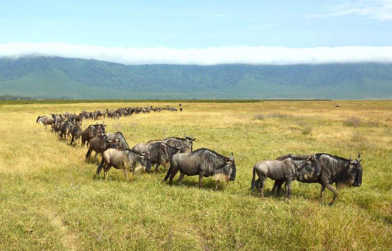 Luxury Bespoke East Africa Safari Rwanda Kenya