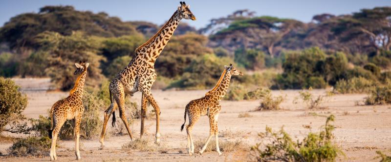 Busch Gardens Private Safari Tour