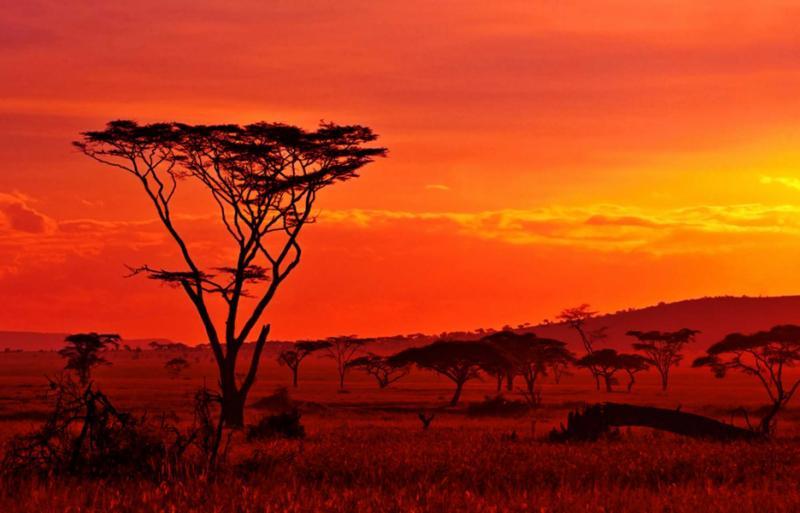 Best Of Tanzania Amp Botswana Safaris Ngorongoro Serengeti