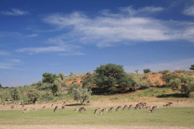 Botswana Getaway Safari For Couples Zicasso