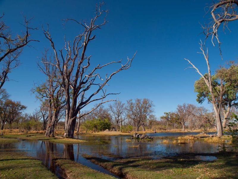 Botswana Okavango Delta Luxury Safari Zicasso