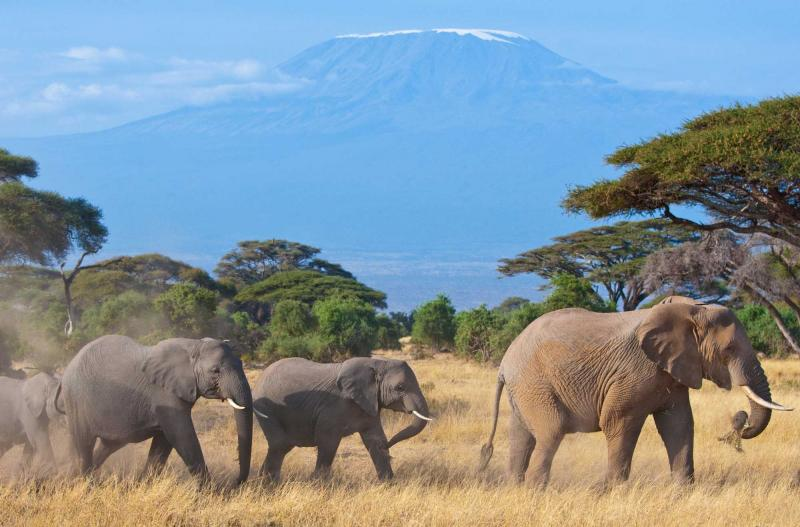 Kenya Elephant Exploration Tour In The Untouched Beauty Of