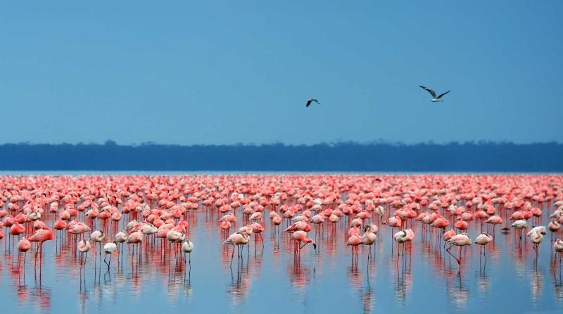 The Best Of Dubai And Kenya Vacation Zicasso